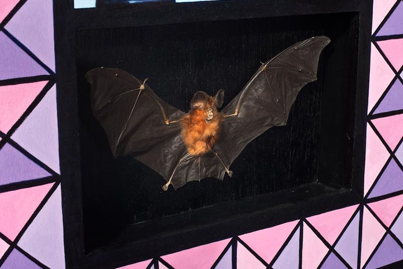 Taxidermy - Bat